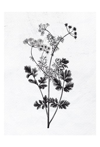 Pressed Herbs 2 art print by Ann Bailey for $22.50 CAD