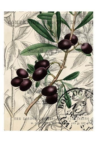 Olive Love 1 art print by Allen Kimberly for $22.50 CAD