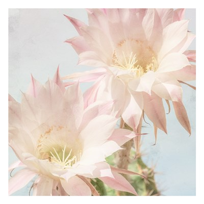 Cactus Bloom art print by Kimberly Allen for $18.75 CAD
