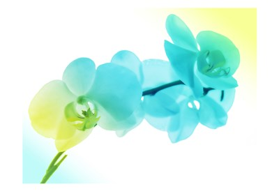 Electric Orchids 2 art print by Milli Villa for $22.50 CAD
