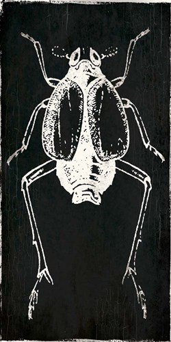 Bug Life Two Black art print by Milli Villa for $22.50 CAD