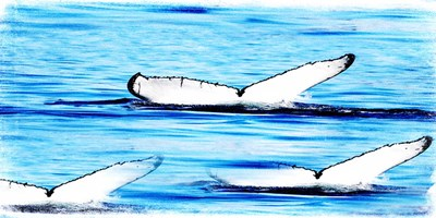Whale Watching art print by Sheldon Lewis for $22.50 CAD