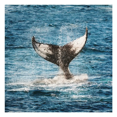 Tail Of The Whale art print by Sheldon Lewis for $18.75 CAD