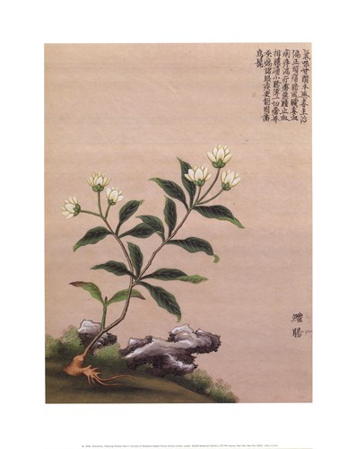 Flowering Chinese Tree III art print by Unknown for $23.75 CAD