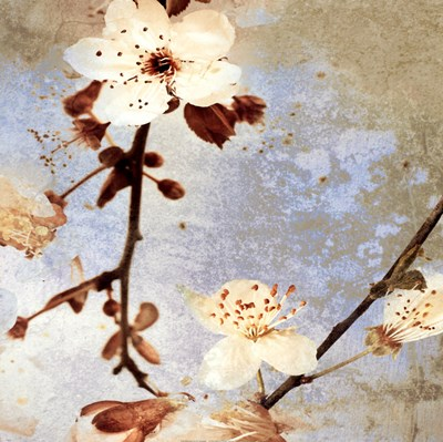 Fresh Blossoms 1 art print by A.F. Duealberi for $26.25 CAD
