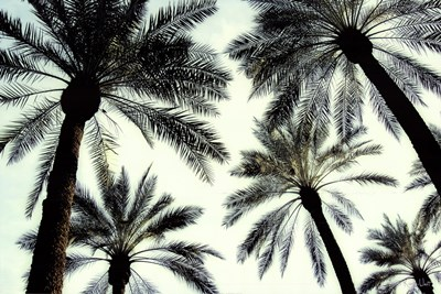 Palm One art print by Carla West for $52.50 CAD