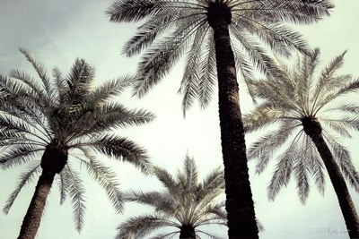 Palm Two art print by Carla West for $52.50 CAD