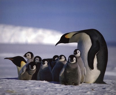 Penguins art print by Unknown for $17.50 CAD