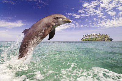 Dolphin Leaping art print by Unknown for $26.25 CAD