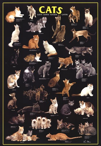 Cat Breeds Black art print by Unknown for $31.25 CAD
