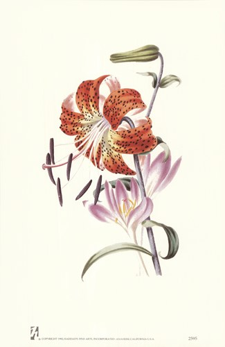 Flowers (Untitled) Tiger Lily art print by Louise Anne Twarmley for $12.50 CAD