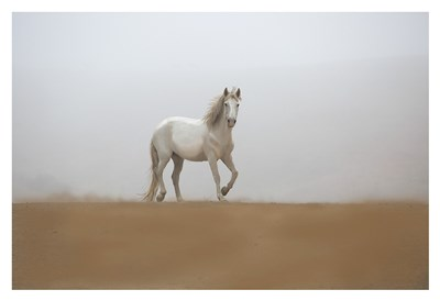 White Stallion art print by Sally Linden for $85.00 CAD