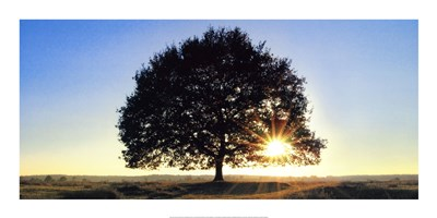 Lonely Tree in De Hoge Veluwe, the Netherlands art print by Jan Lens for $41.25 CAD