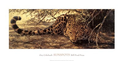 Sunspots (detail) art print by Guy Coheleach for $46.25 CAD