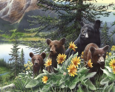 Basking in the Balsams art print by Kevin Daniel for $26.25 CAD