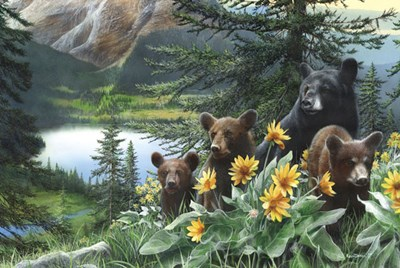 Basking in the Balsams art print by Kevin Daniel for $60.00 CAD