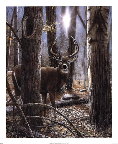 Woodland Sentry art print by Kevin Daniel for $32.50 CAD