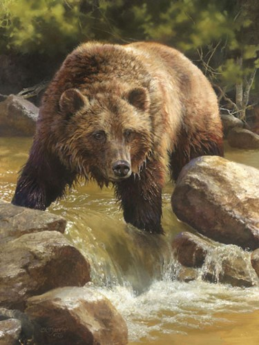 Grizzly at Roaring Creek art print by Bonnie Marris for $32.50 CAD