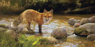 Morning at Honey Creek art print by Bonnie Marris for $32.50 CAD
