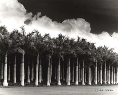 White Palms, Costa Rica art print by Monte Nagler for $16.25 CAD