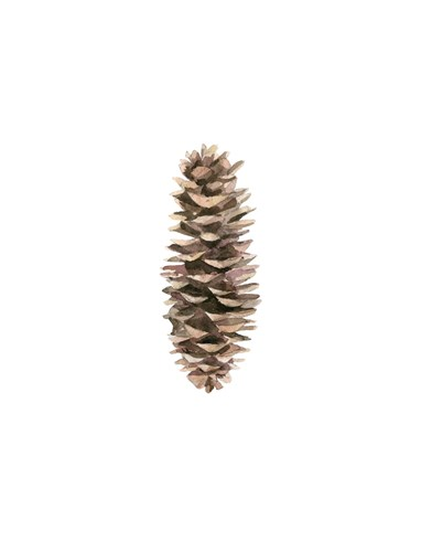 Pine Cone I art print by Ann Solo for $60.00 CAD