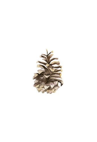 Pine Cone II art print by Ann Solo for $20.00 CAD