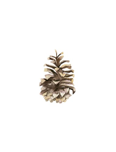 Pine Cone II art print by Ann Solo for $60.00 CAD