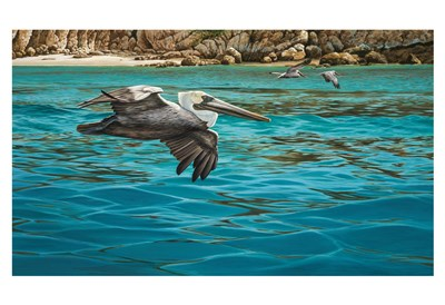 Pelicans art print by Christopher Walden for $20.00 CAD