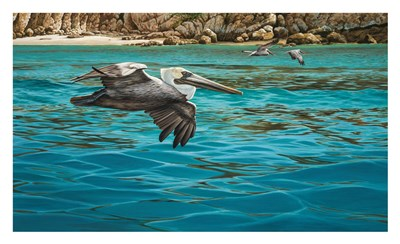 Pelicans art print by Christopher Walden for $60.00 CAD