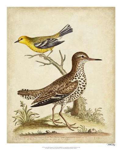Antique Bird Menagerie I art print by George Edwards for $50.00 CAD