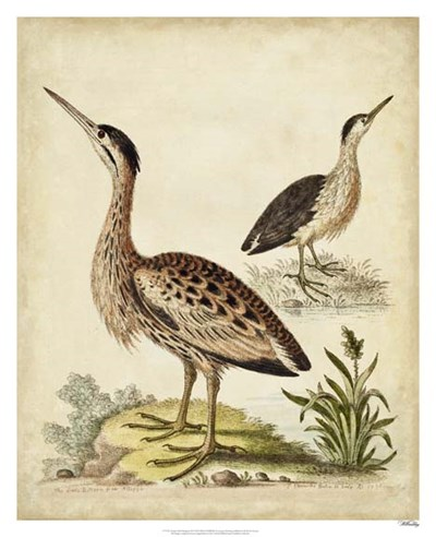Antique Bird Menagerie III art print by George Edwards for $112.50 CAD