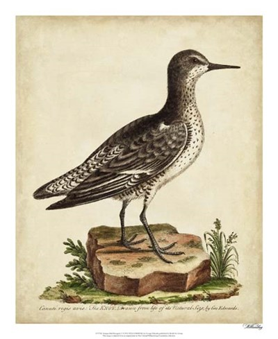 Antique Bird Menagerie V art print by George Edwards for $50.00 CAD