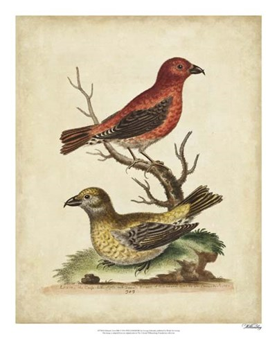 Edwards Cross Bills art print by George Edwards for $50.00 CAD