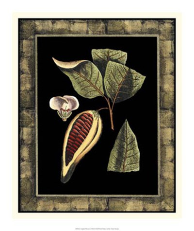 Tropical Bounty I art print by Vision Studio for $37.50 CAD