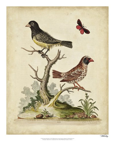 Edwards Bird Pairs I art print by George Edwards for $50.00 CAD