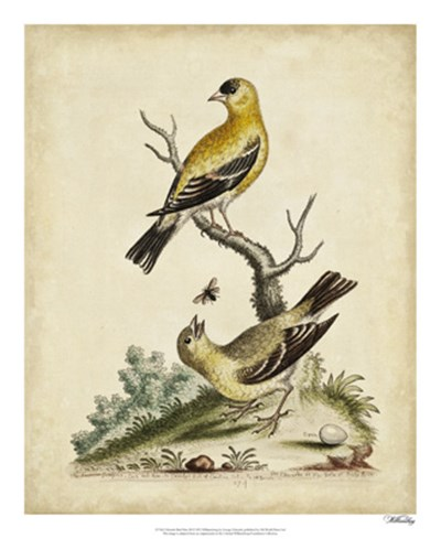 Edwards Bird Pairs III art print by George Edwards for $50.00 CAD