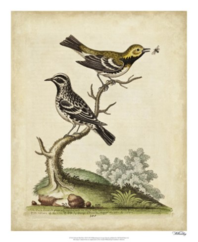 Edwards Bird Pairs VIII art print by George Edwards for $50.00 CAD