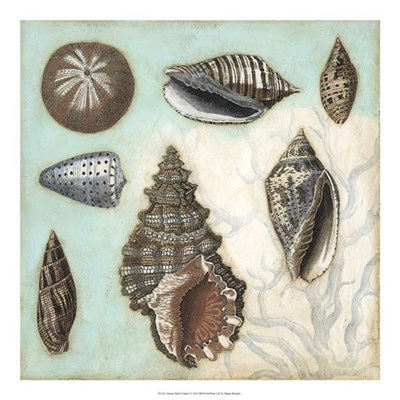 Antique Shell Collage I art print by Megan Meagher for $50.00 CAD