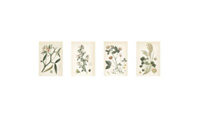 Coral Botanicals art print by Unknown for $90.00 CAD