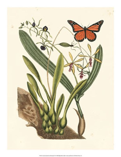 Butterfly and Botanical IV art print by Marc Catesby for $52.50 CAD