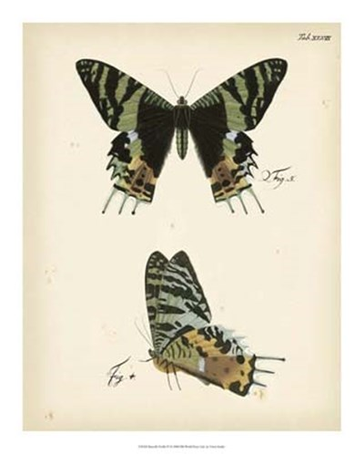 Butterfly Profile IV art print by Vision Studio for $45.00 CAD