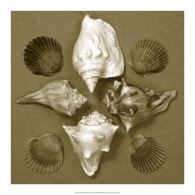 Shell Collector Series III art print by Renee Stramel for $45.00 CAD