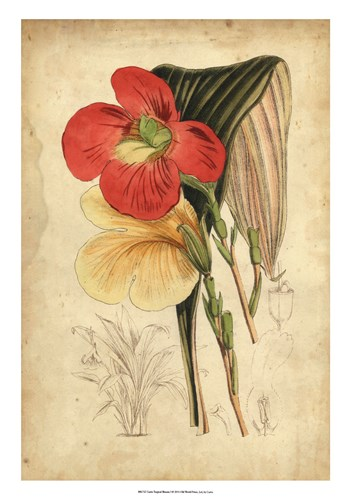 Tropical Blooms I art print by Edward S. Curtis for $56.25 CAD