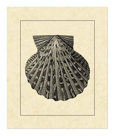 Vintage Shell II art print by Vision Studio for $52.50 CAD