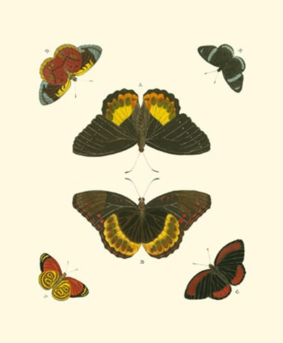 Butterfly Study I art print by Pieter Cramer for $13.75 CAD