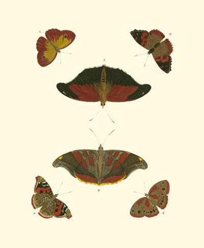 Butterfly Study III art print by Pieter Cramer for $13.75 CAD