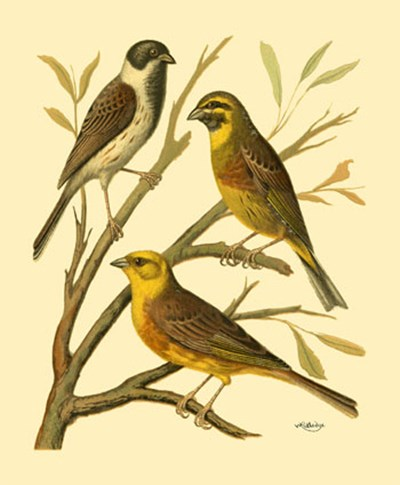 Domestic Bird Family I art print by W. Rutledge for $13.75 CAD