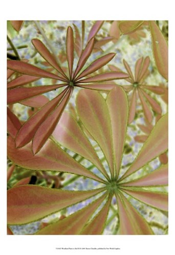 Woodland Plants in Red III art print by Sharon Chandler for $21.25 CAD