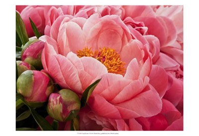 Coral Peonies I art print by Rachel Perry for $21.25 CAD