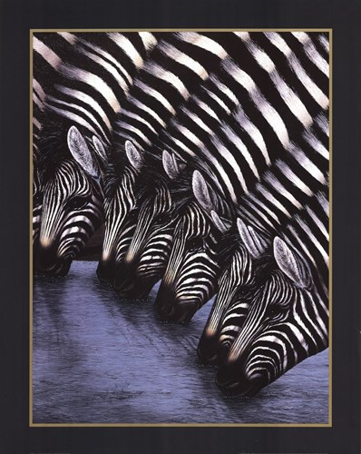 Zebra's Watering Hole art print by Dexter Griffin for $25.00 CAD